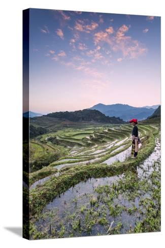 Vietnam, Sapa. Red Dao Woman on Rice Paddies at Sunrise (Mr)-Matteo Colombo-Stretched Canvas Print
