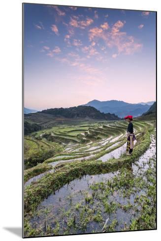 Vietnam, Sapa. Red Dao Woman on Rice Paddies at Sunrise (Mr)-Matteo Colombo-Mounted Photographic Print