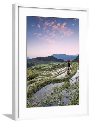Vietnam, Sapa. Red Dao Woman on Rice Paddies at Sunrise (Mr)-Matteo Colombo-Framed Art Print