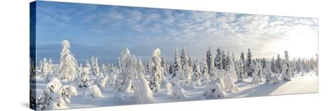 Snow Covered Trees, Riisitunturi National Park, Lapland, Finland-Peter Adams-Stretched Canvas Print