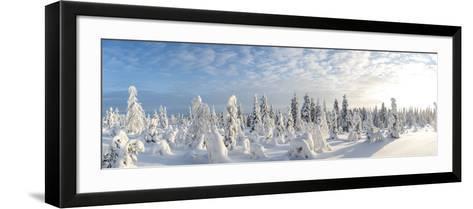 Snow Covered Trees, Riisitunturi National Park, Lapland, Finland-Peter Adams-Framed Art Print
