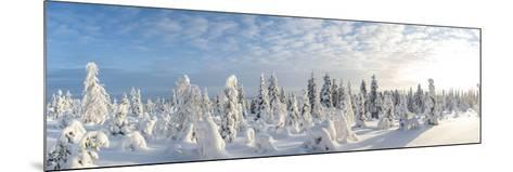 Snow Covered Trees, Riisitunturi National Park, Lapland, Finland-Peter Adams-Mounted Photographic Print