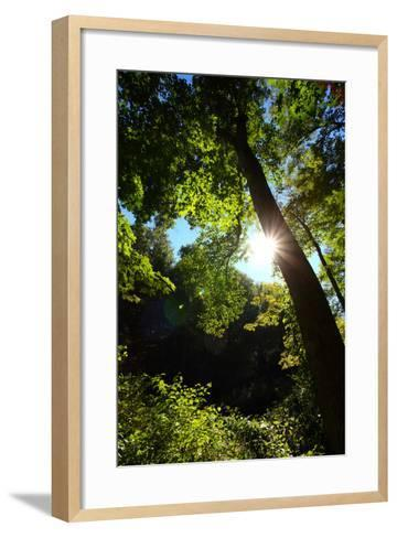 Back-Lit Midsummer Trees with Green Leaves and Blue Sky-George Grall-Framed Art Print