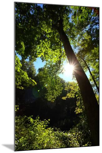 Back-Lit Midsummer Trees with Green Leaves and Blue Sky-George Grall-Mounted Photographic Print