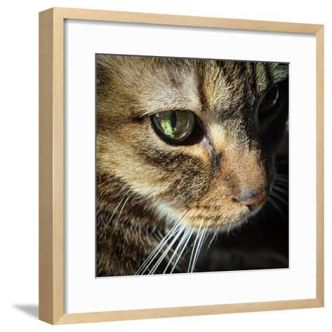 Close Up of the Eye and Face of a Pet Tabby Cat, in Sunlight Through a Window-Amy and Al White and Petteway-Framed Art Print