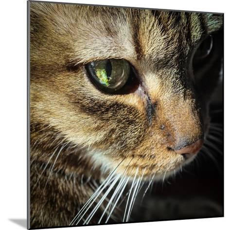 Close Up of the Eye and Face of a Pet Tabby Cat, in Sunlight Through a Window-Amy and Al White and Petteway-Mounted Photographic Print