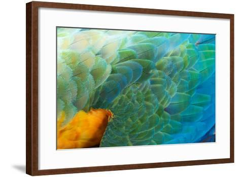 Close Up of the Wing and Feathers of a Beautiful Wild Harlequin Macaw-Alex Saberi-Framed Art Print