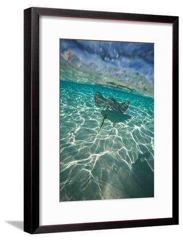 A Stingray Swims over a Series of Shallow Sandbars Off the Cayman Islands-Chris Bickford-Framed Art Print