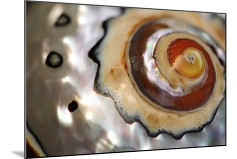 Close Up of a Polished Moon Snail Shell-Darlyne A^ Murawski-Mounted Photographic Print