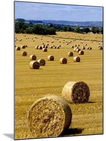 Bales of Hay in County Carlow, Ireland-Chris Hill-Mounted Photographic Print