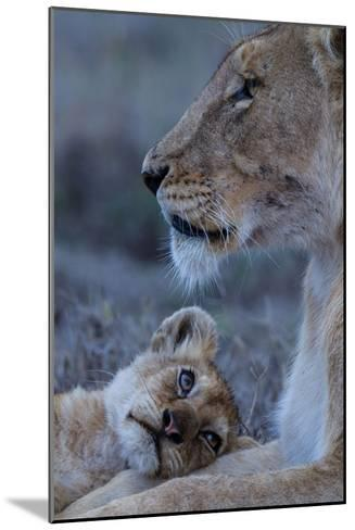 A Lion Cub Looks Up at its Mother-Michael Nichols-Mounted Photographic Print