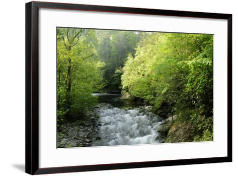 View of Laurel Creek Early on a Spring Morning-Darlyne A^ Murawski-Framed Art Print