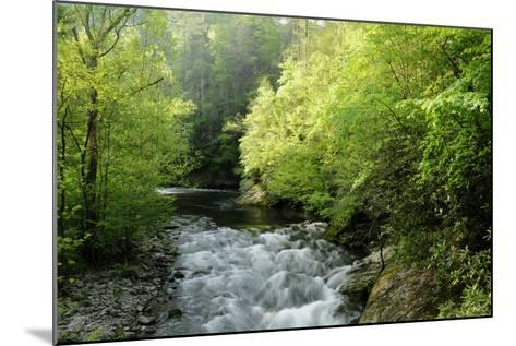 View of Laurel Creek Early on a Spring Morning-Darlyne A^ Murawski-Mounted Photographic Print