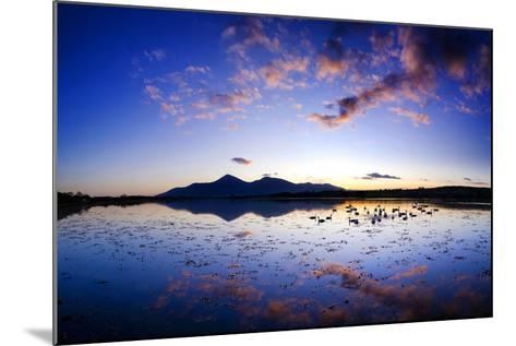 Swans at Dusk on Dundrum Bay, Mournes, County Down-Chris Hill-Mounted Photographic Print