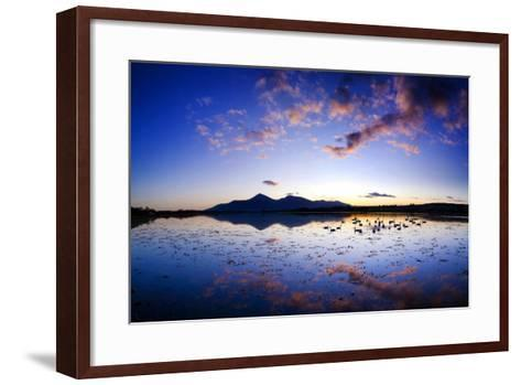 Swans at Dusk on Dundrum Bay, Mournes, County Down-Chris Hill-Framed Art Print
