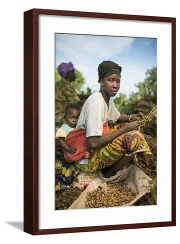 A Woman Harvests Peanuts on a Farm-Jim Richardson-Framed Art Print
