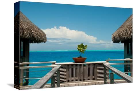 A Plant in a Walkway Between Cottages on Bora Bora-Karen Kasmauski-Stretched Canvas Print