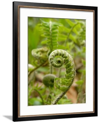 A Fiddlehead Fern Beginning to Uncurl-Amy and Al White and Petteway-Framed Art Print