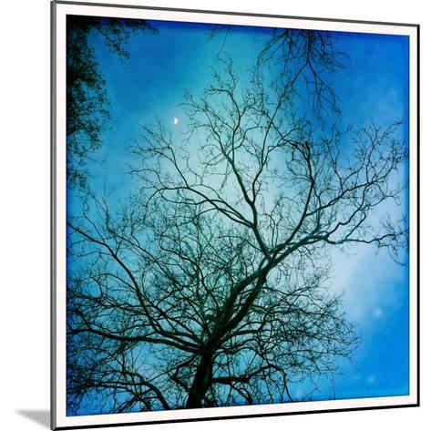 The Moon Behind a Bare Sycamore Tree-Skip Brown-Mounted Photographic Print