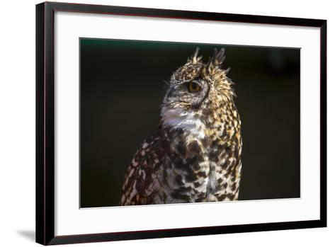 Portrait of a Spotted Eagle-Owl, Bubo Africanus-Stephen Alvarez-Framed Art Print