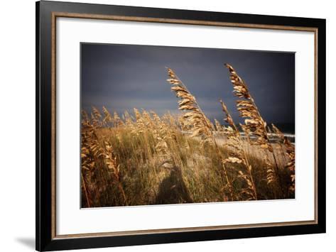 Dune Grasses in Cape Hatteras in North Carolina-Chris Bickford-Framed Art Print