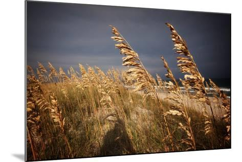 Dune Grasses in Cape Hatteras in North Carolina-Chris Bickford-Mounted Photographic Print