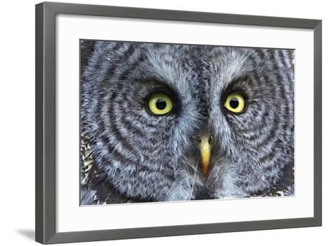 The Eyes of a Great Gray Owl-Barrett Hedges-Framed Art Print
