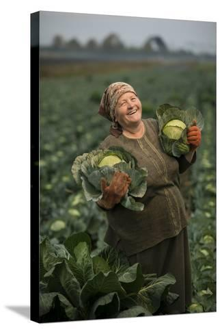 A Cabbage Farmer on Her Farm-Jim Richardson-Stretched Canvas Print