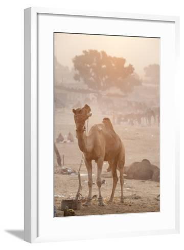 A Camel in the Desert at Sunrise-Jonathan Kingston-Framed Art Print