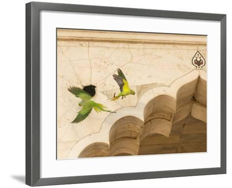 Ring Necked Parrots at Agra Fort-Michael Melford-Framed Art Print