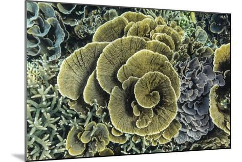 A Profusion of Hard and Soft Coral Underwater on Siaba Kecil-Michael Nolan-Mounted Photographic Print