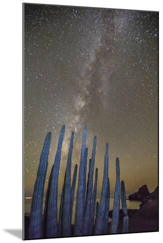 Night View of the Milky Way with Organ Pipe Cactus (Stenocereus Thurberi) in Foreground-Michael Nolan-Mounted Photographic Print