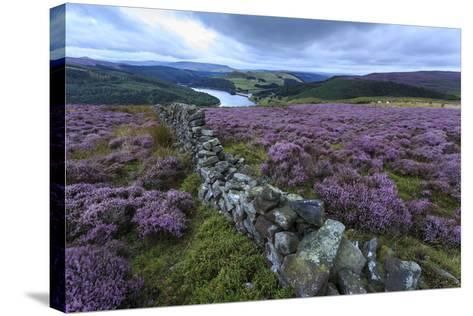 Heather Covered Bamford Moor-Eleanor Scriven-Stretched Canvas Print