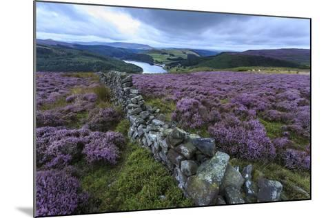 Heather Covered Bamford Moor-Eleanor Scriven-Mounted Photographic Print