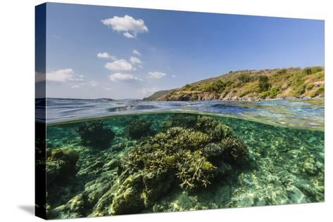 Underwater Reef System of the Marine Reserve on Moya Island, Nusa Tenggara Province, Indonesia-Michael Nolan-Stretched Canvas Print
