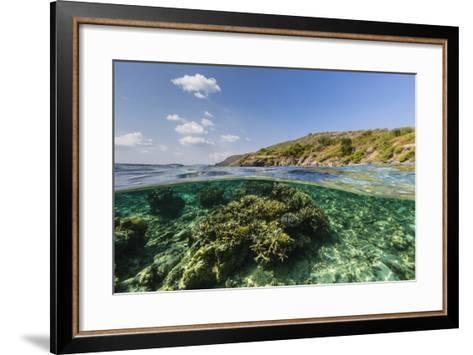 Underwater Reef System of the Marine Reserve on Moya Island, Nusa Tenggara Province, Indonesia-Michael Nolan-Framed Art Print