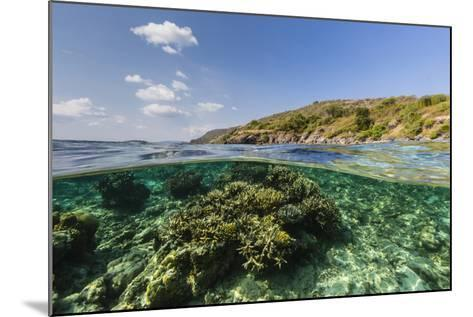 Underwater Reef System of the Marine Reserve on Moya Island, Nusa Tenggara Province, Indonesia-Michael Nolan-Mounted Photographic Print