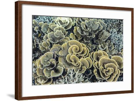 A Profusion of Hard and Soft Coral Underwater on Siaba Kecil-Michael Nolan-Framed Art Print