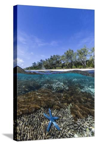 Above and Below View of Coral Reef and Sandy Beach on Jaco Island, Timor Sea, East Timor, Asia-Michael Nolan-Stretched Canvas Print