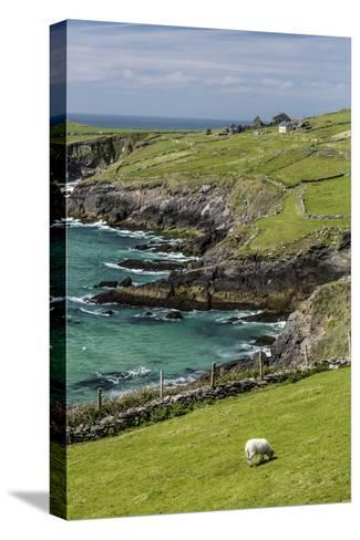 Sheep Fences and Rock Walls Along the Dingle Peninsula-Michael Nolan-Stretched Canvas Print