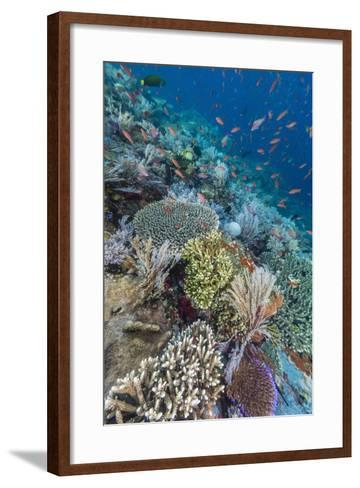 A Profusion of Coral and Reef Fish on Batu Bolong, Komodo Island National Park, Indonesia-Michael Nolan-Framed Art Print
