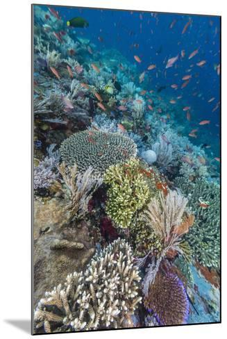 A Profusion of Coral and Reef Fish on Batu Bolong, Komodo Island National Park, Indonesia-Michael Nolan-Mounted Photographic Print