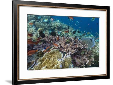 A Profusion of Coral and Reef Fish on Batu Bolong, Komodo Island National Park, Indonesia-Michael Nolan-Framed Art Print