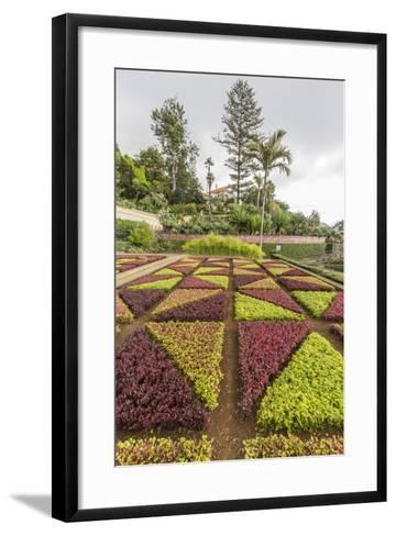 A View of the Botanical Gardens-Michael Nolan-Framed Art Print