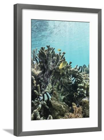 Underwater Reef System on Pink Sand Beach, Komodo National Park, Komodo Island, Indonesia-Michael Nolan-Framed Art Print