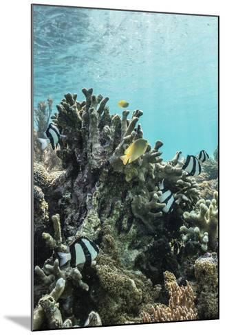 Underwater Reef System on Pink Sand Beach, Komodo National Park, Komodo Island, Indonesia-Michael Nolan-Mounted Photographic Print