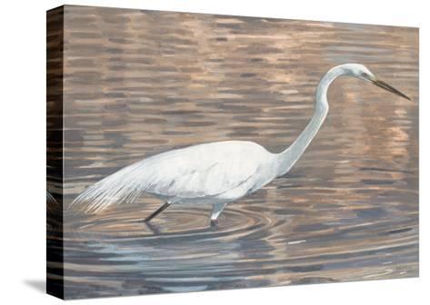 Wading Shore Bird-Norman Wyatt Jr^-Stretched Canvas Print
