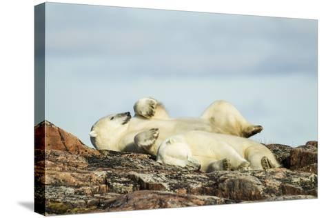 Polar Bears Sleeping on Harbour Islands, Hudson Bay, Nunavut, Canada-Paul Souders-Stretched Canvas Print