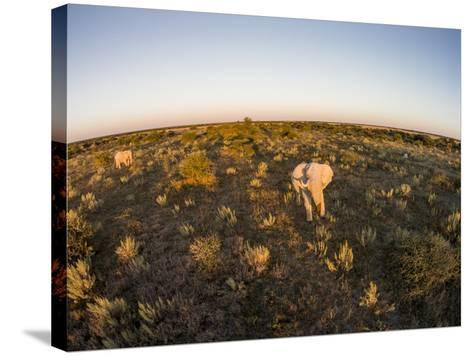 Aerial View of Elephant, Nxai Pan National Park, Botswana-Paul Souders-Stretched Canvas Print