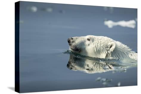 Swimming Polar Bear, Hudson Bay, Nunavut, Canada-Paul Souders-Stretched Canvas Print